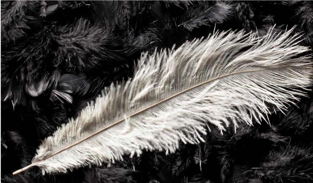 La signification des plumes messages des anges.